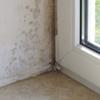 schutz und hilfe vor schimmelpilz sporen und bakterien eind mmung beseitigung von wohngiften. Black Bedroom Furniture Sets. Home Design Ideas